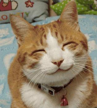 笑顔,動物,笑い顔,画像,まとめ021