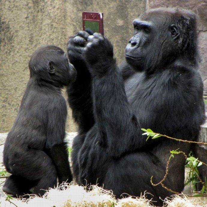 吹き出し注意,動物,面白画像,まとめ022