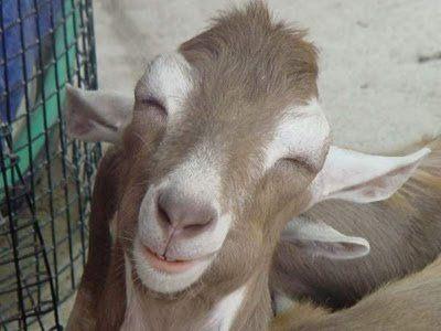 笑顔,動物,笑い顔,画像,まとめ023