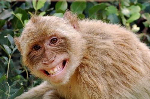 笑顔,動物,笑い顔,画像,まとめ024