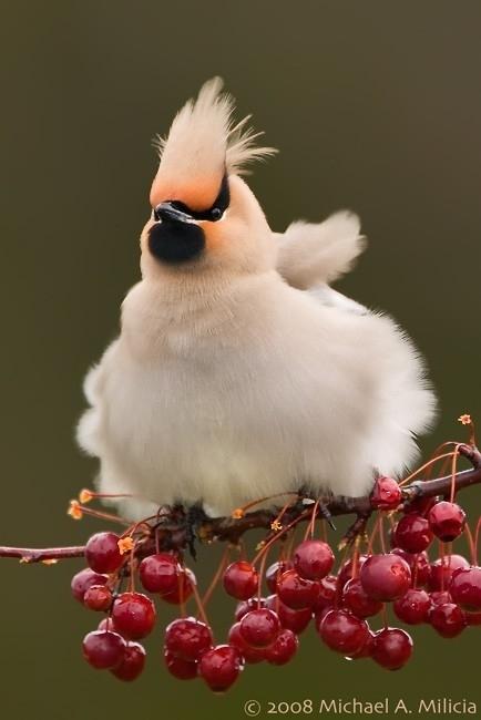 丸っこい,かわいい,動物画像,まとめ025