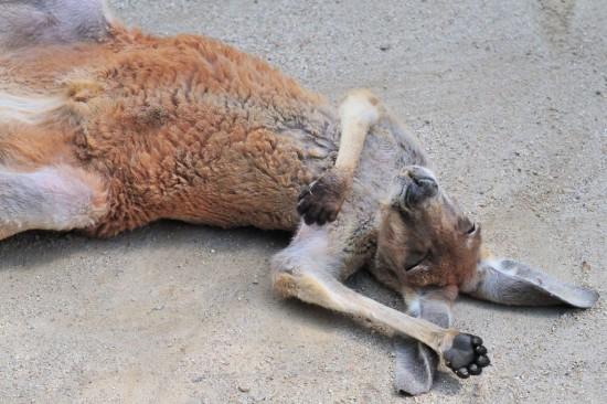 可愛い,動物,寝顔,画像,まとめ028