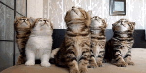可愛すぎ,ヤバイ,猫,画像,まとめ036
