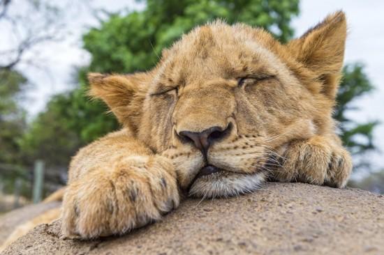 可愛い,動物,寝顔,画像,まとめ044