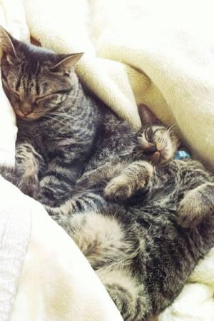 可愛すぎ,ヤバイ,猫,画像,まとめ052