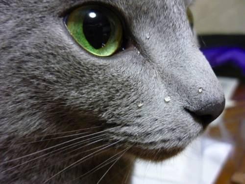 可愛すぎ,ヤバイ,猫,画像,まとめ161