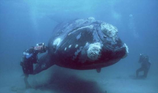 未知なる世界,深海生物,画像,まとめ008