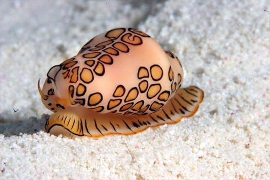 未知なる世界,深海生物,画像,まとめ010