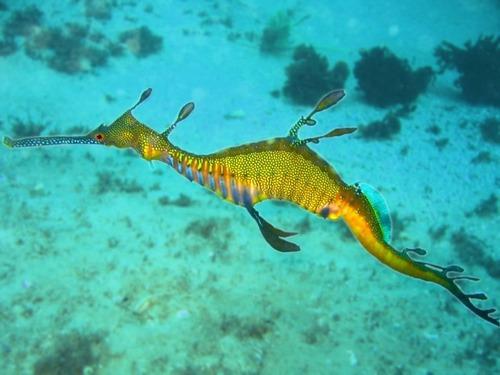 未知なる世界,深海生物,画像,まとめ018