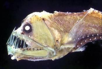 未知なる世界,深海生物,画像,まとめ022