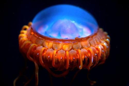 未知なる世界,深海生物,画像,まとめ046