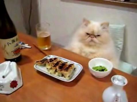可愛い,面白い,猫,画像,まとめ004