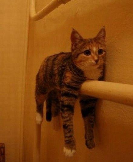 可愛い,面白い,猫,画像,まとめ009
