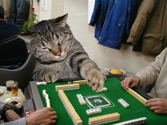 可愛い,面白い,猫,画像,まとめ010