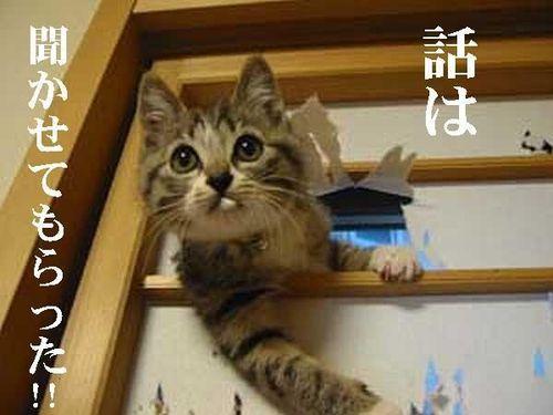 可愛い,面白い,猫,画像,まとめ011