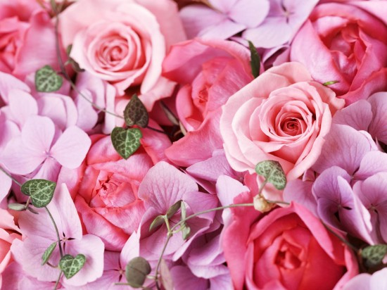 バラ,画像,まとめ011