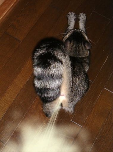 可愛い,面白い,猫,画像,まとめ013
