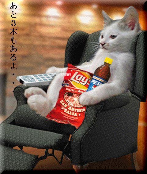 可愛い,面白い,猫,画像,まとめ014