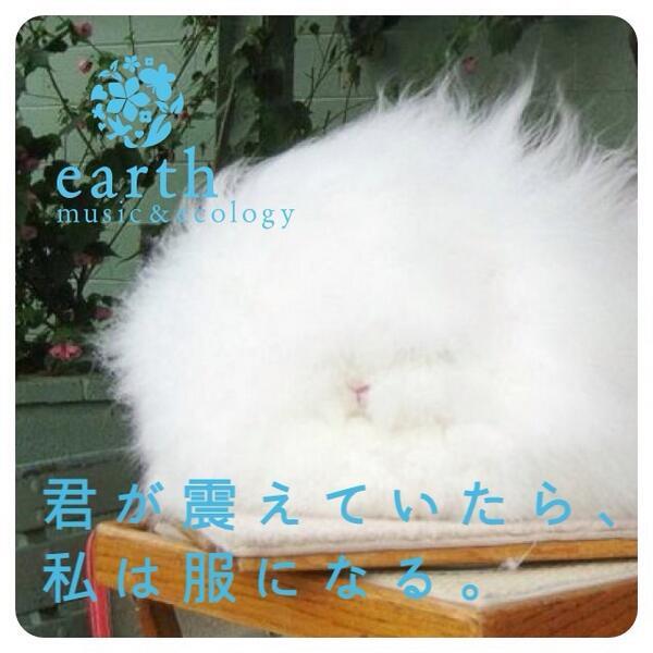 モフモフ,アンゴラウサギ,画像,まとめ004