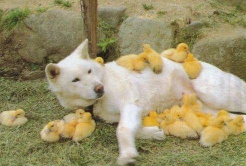 癒し,動物,仲良し,画像,まとめ004
