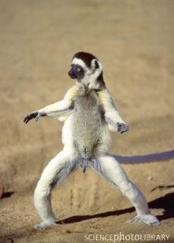 腹筋崩壊,二足歩行,動物,面白画像,まとめ005