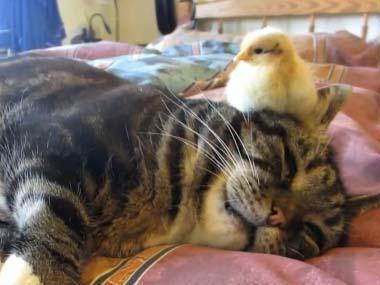 癒し,動物,仲良し,画像,まとめ010