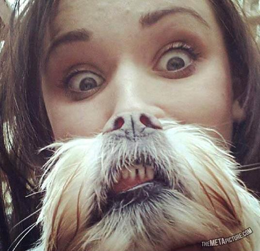 動物髭,面白画像,まとめ011