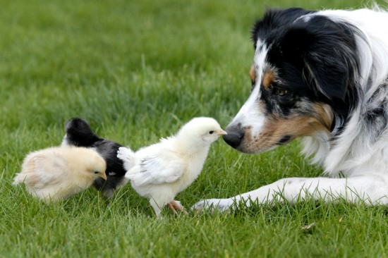 癒し,動物,仲良し,画像,まとめ012
