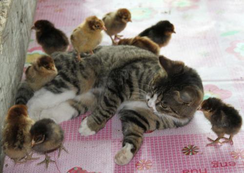癒し,動物,仲良し,画像,まとめ015