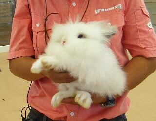 モフモフ,アンゴラウサギ,画像,まとめ017