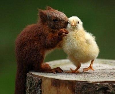 癒し,動物,仲良し,画像,まとめ018