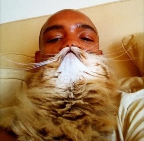 動物髭,面白画像,まとめ019
