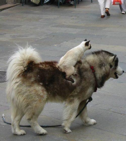 猫,犬,仲良し,ほほえましい,画像,まとめ001
