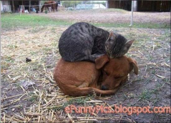 猫,犬,仲良し,ほほえましい,画像,まとめ002