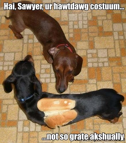 これはすごい,ホットドック,犬,面白画像,まとめ007