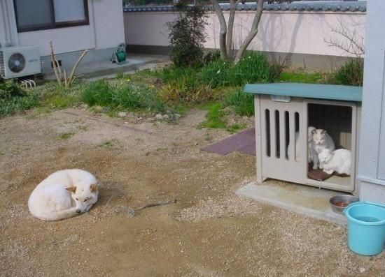 猫,犬,仲良し,ほほえましい,画像,まとめ007