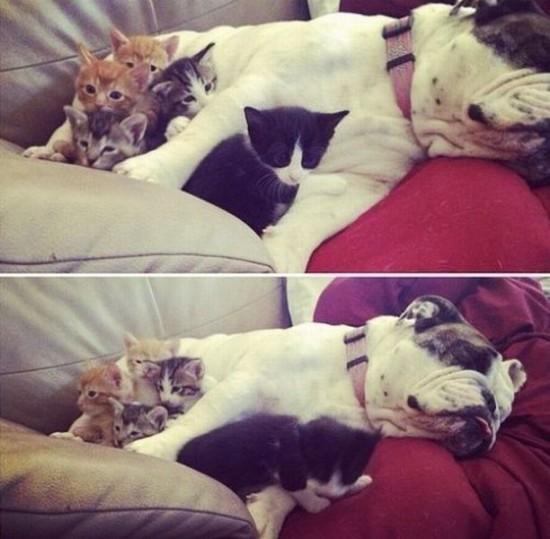 猫,犬,仲良し,ほほえましい,画像,まとめ009