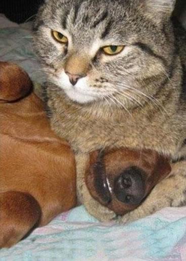 猫,犬,仲良し,ほほえましい,画像,まとめ010