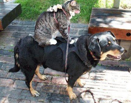 猫,犬,仲良し,ほほえましい,画像,まとめ011