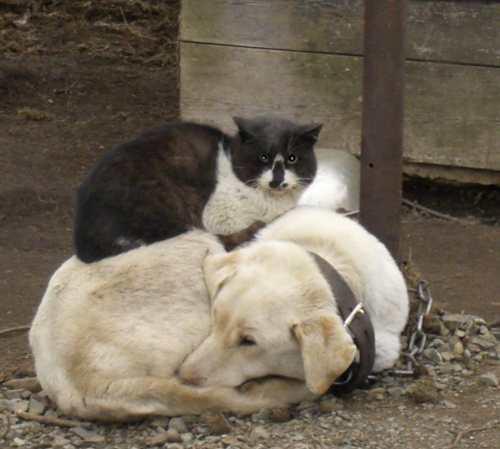 猫,犬,仲良し,ほほえましい,画像,まとめ012