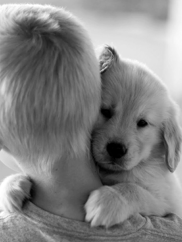 人間,仲良し,犬,画像,まとめ012