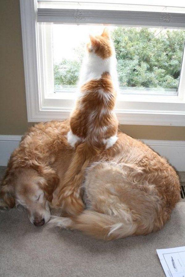 猫,犬,仲良し,ほほえましい,画像,まとめ013