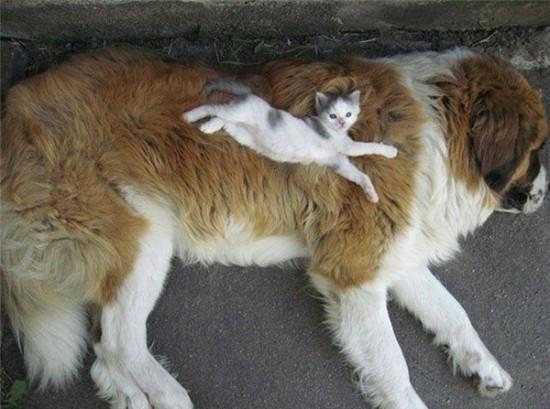 猫,犬,仲良し,ほほえましい,画像,まとめ014