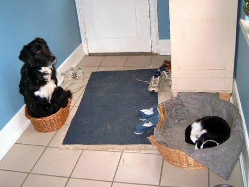 猫,犬,仲良し,ほほえましい,画像,まとめ015