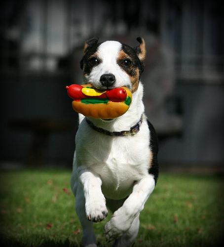 これはすごい,ホットドック,犬,面白画像,まとめ016
