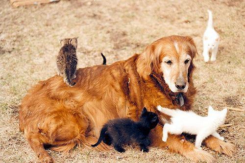 猫,犬,仲良し,ほほえましい,画像,まとめ016