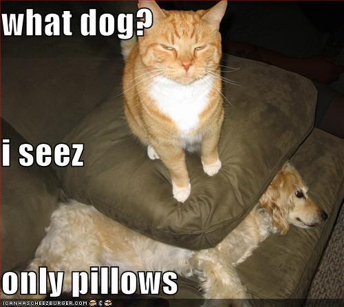 猫,犬,仲良し,ほほえましい,画像,まとめ018