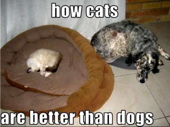 猫,犬,仲良し,ほほえましい,画像,まとめ019