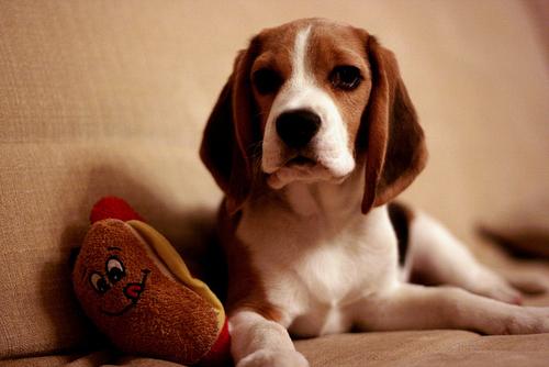これはすごい,ホットドック,犬,面白画像,まとめ039