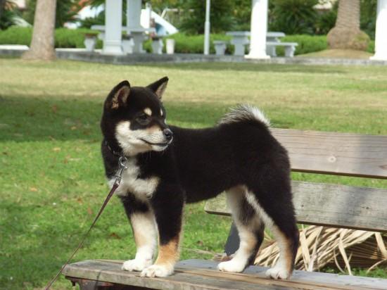 カッコいい,可愛い,日本犬,画像,まとめ067